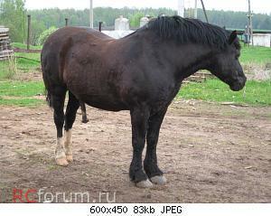 Нажмите на изображение для увеличения Название: !Iожирение у лошадей-6.JPG Просмотров: 11 Размер:83.4 Кб ID:3873710